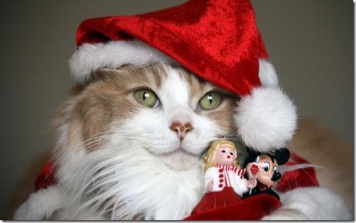 Новогодний-кот-3
